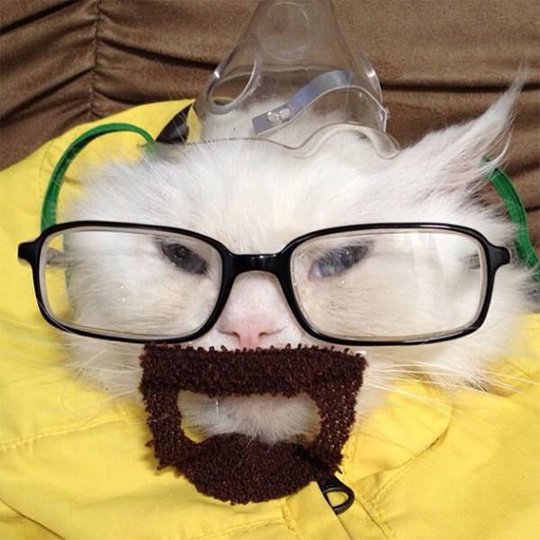 breaking-bad-cat-1