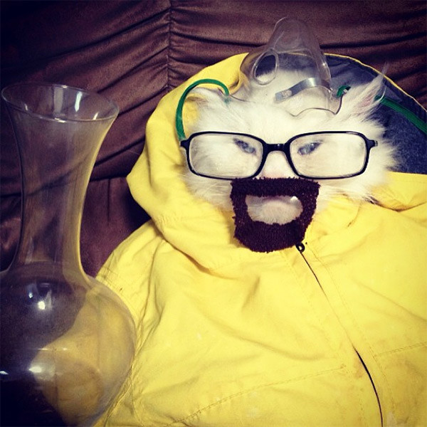 breaking-bad-cat-2